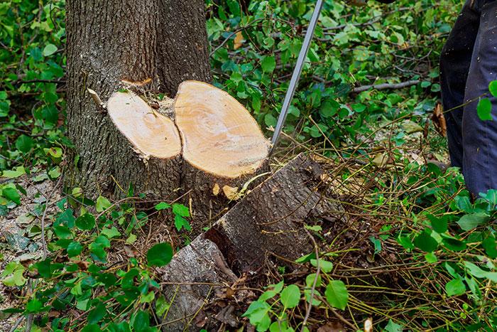 Pewaukee Tree Shredder