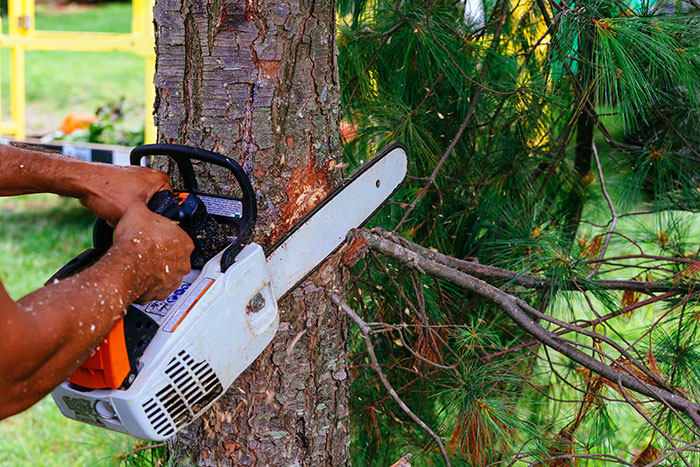 Tree Trimming & Cutting