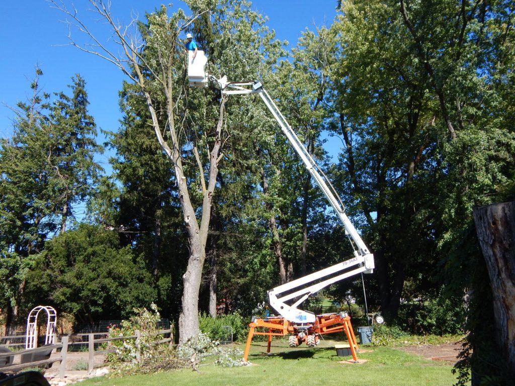 Tree Trimming and Cutting Waukesha